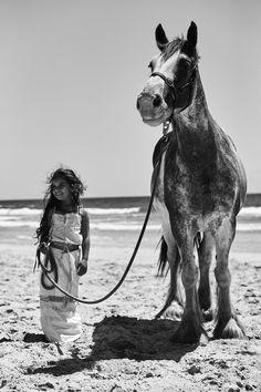 Spirit animal :: horse