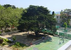 Okulumuz logosunda yer alan Servi Ağacı 165 yıldır eşsiz bir görkem ve güzellikle okulumuzun bahçesini süslemektedir.