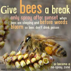 Bee Facts, Backyard Beekeeping, Bee Friendly, Living Off The Land, Busy Bee, Save The Bees, Bee Happy, Bees Knees, Freundlich