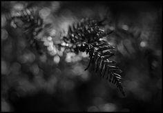 autumn light: Photo by Photographer Timo Hartikainen - photo.net