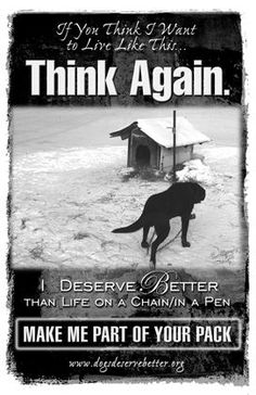 If you Think I Want to Live Like This...  Think Again.  I deserve better than life on a chain or in a pen. Dogs Deserve Better Make me part of your pack poster. Help to change attitudes towards animals.