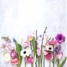 Most Beautiful Flowers for The First Day Of Spring – Onechitecture – Flower Arrangements Most Beautiful Flowers, My Flower, Pretty Flowers, Flowers For Love, Pictures Of Spring Flowers, Spring Images, Purple Flowers, Flower Art, Flower Backgrounds