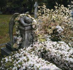 Photo flowers by Leonard Tharp, photo Narinder Sall Navy Flowers, Flower Arrangements, Garden Sculpture, Florals, Outdoor Decor, Photography, Floral, Floral Arrangements, Photograph