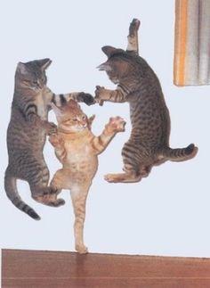 ≪陽気すぎるネコ≫踊る猫たち集めてみた