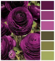 Petal Purple Hues and Rich Green Vine Color Combo