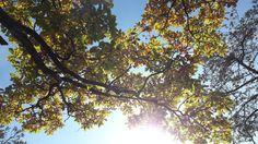 Bäume sind Gedichte die die Erde in den Himmel schreibt (Khalil Gibran) #lettherebeom #beautifulnature #thankfulforthemoment #lovethenature