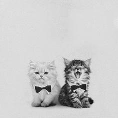 Cats in bowties - awwwwwww #cute #bowties #kittens
