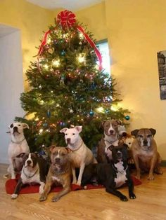 Super cute dog Christmas tree!