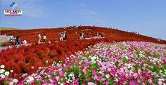 A bela área com as cores do outono desse parque atrai milhares de visitantes. Confira!