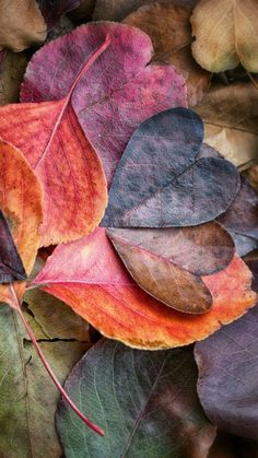 See what Virginie Lecours (Virginie_Tanguay_Lecours) found on We Heart It, your everyday app to get lost in what you love. Fall Wallpaper, Flower Wallpaper, Wallpaper Backgrounds, Iphone Wallpaper, Beautiful Nature Wallpaper, Beautiful Flowers, Heart In Nature, Autumn Art, Autumn Leaves