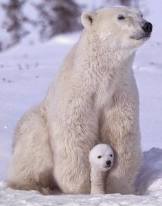 Polar protection