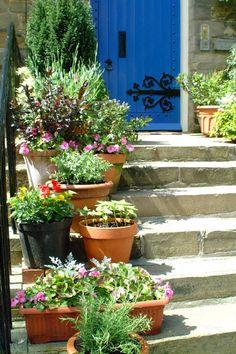 Front door and a small garden