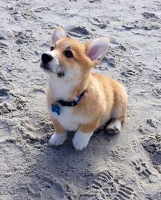 40 Corgis For All The Corgi Addicts