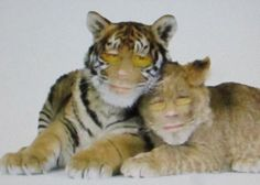 Jokke tiikeri/leijona Grinch, Animals, Animales, Animaux, Animal, Animais