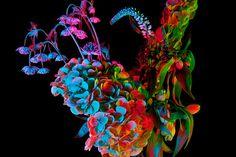Rebecca Scheinberg Flower Photography