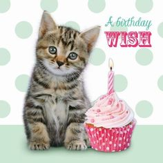 Kitty and cupcake birthday 30th Birthday Meme, Happy Birthday Kitten, Birthday Verses, Birthday Wishes Funny, Happy Birthday Messages, Happy Birthday Quotes, Cat Birthday, Animal Birthday, Birthday Greeting Cards