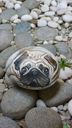 """Pug was once claimed as a Dutch dog ! The name is thought to come from the Latin """" pugnus """", meaning """"closed fist """",which is what the Pug. Pebble Painting, Pebble Art, Stone Painting, Rock Painting, Painted Rock Animals, Painted Rocks, Hand Painted, Amor Pug, Art Rupestre"""