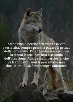Some Quotes, Best Quotes, Chad Kroeger, Lion Quotes, She Wolf, Beautiful Wolves, Outdoor Men, Dark Fantasy Art, True Stories