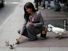 Ducklings scam