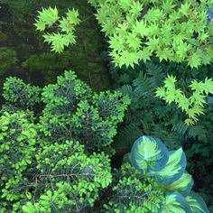 Variegated foliage light the corners of Curtis Steiner's Shade garden.
