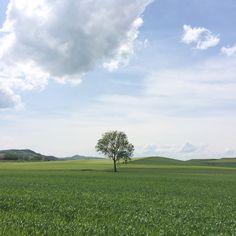 Tranquilidad en estado puro en #Arkaia #turismo #rural junto a #Vitoria #Gasteiz #ecologia #accesible #conalma #concalma  #igersgasteiz #igerseuskadi