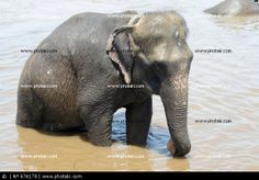 http://www.photaki.com/picture-elephant-bathing-in-river_674178.htm