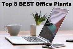 8 Best Office Plants - Low maintenance plants that require low light.