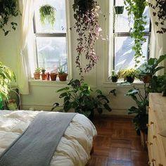 164 Best Plants Bedroom Images On Pinterest In 2018