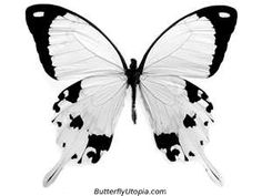 Butterfly Coloring Pages, Butterfly Crafts, Page, Drawings, Pictures ...