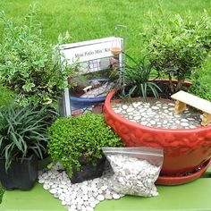 Miniature Garden Kit for Indoors, Outdoors, Fairy Garden, Mini Plants, Trees and Shipping Included
