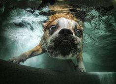 ¡Perros bajo el agua! - Naturaleza - Ciencia - Noticias de Ciencia, Tecnología, Historia - Quo.es