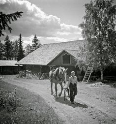 Black and White Photos of Daily Life in Finland in 1941 - Finnish horse