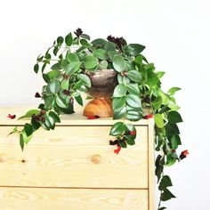 Make this easy bowl planter with just two IKEA bowls to bring plants in for spring
