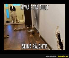 Finland, Animals And Pets, Funny Pictures, Smile, Memes, Dogs, Quotes, Pets, Fanny Pics