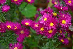 Sun Garden, Autumn Garden, Types Of Soil, Types Of Plants, Border Plants, Coastal Gardens, Wild Flowers, Rose Flowers, How To Attract Birds
