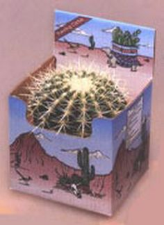 Golden Barrel Only Planting Kit - This kit contain 1 – 6″ Golden Barrel Cactus with no soil. It is shipped bare root and ready for planting in your own container.  Now you can own a piece of the American Southwest! Desert Canyon Gifts presents a selection of Cactus Growing Kits. Most cactus planting kits come complete with cacti, the right type of soil, decorative pebbles, planter, and a unique Arizona sign.  $21.95