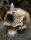 Cyclops Skull - Click for larger image