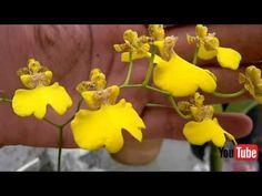 Orquídea não da flor ? Aprenda como fazer o melhor substrato para orquídea - YouTube