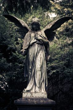 ,Wow...talk about a weeping angel...you should see the pinterest board for this!!