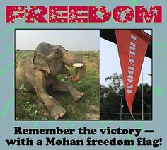 SWEEPSTAKES TIME! Now's your chance to win one of the actual freedom flags awaiting Mohan at our sanctuary just after his rescue! What better way to remember his long, tough, and triumphant journey than with a memento from that amazing day? Click the link below -- all you need is an email address and a bit of luck!  www.wildlifesos.org/sweepstakes