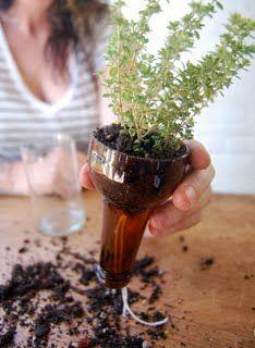 Self-watering wine bottle planters for window sill herb gardens!