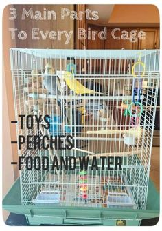 How to Set Up a Birdcage for a Parakeet or Cockatiel This set-up method is fast, easy, and foolproof for any bird. Make your birds feel at home with a quick and easy tutorial on how to set up a bird cage for parakeets, cockatiels, or other small birds. Budgie Toys, Budgie Parakeet, Parrot Toys, Bird Toys, Parakeets, Diy Cockatiel Toys, Diy Parakeet Cage, Parrot Pet, Diy Bird Cage