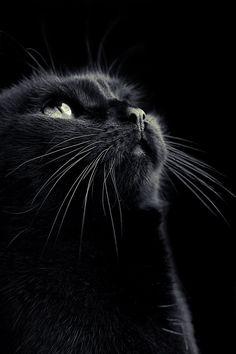 Un chat noir. Un gato Negro. A Black cat. Beautiful Cats, Animals Beautiful, Cute Animals, Lovely Eyes, Happy Animals, Hello Beautiful, Beautiful Beach, Nature Animals, Crazy Cat Lady