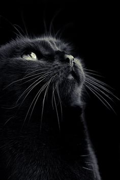 My beautiful black cat.