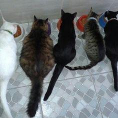 Gatos jantando.