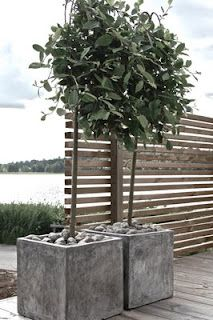 Gorgeous, simple fence + monochromatic planter boxes with trees