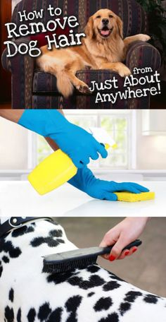 Do you make your décor choices based on how visible your dog's hair will be on the material? If so, it's time for some tried-and-true dog hair removal solutions. When you're in a rush, wet your palm and fingers, and brush your hand across the sofa cushion, pant leg, or other hairy surface. The hair sticks to your damp skin, and you can dispose of it easily. Once you are done with that, check out eBay's guide to removing dog hair from just about anywhere.