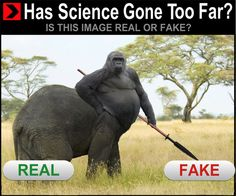 Elerilla - Has Science Gone Too Far - Hybrid Animals