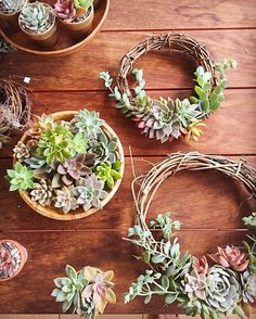 """1,047 Likes, 3 Comments - Jaclyn Bridges (@queenofsucculents) on Instagram: """"This picture just makes me want to do succulent diys all night. It will have to wait for the…"""""""