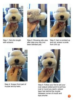 How to create a cute muzzle!